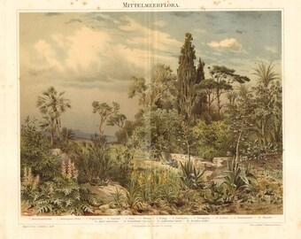 1896 Mediterranean Plants, Fig, Cypress, Olive, Orange, Date Palm, Fan Palm, Oleander, Maguey, Opuntia, Original Antique Chromolithograph
