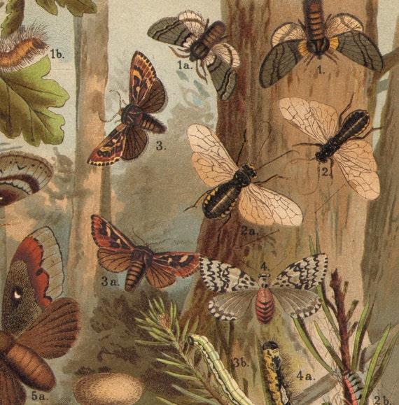 1893 Woodland Spoilers - Bugs, Pine Beauty, Pine-tree Lappet, Sawfly, Wood Borer Original Antique Chromolithograph