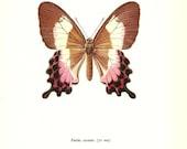 BUTTERFLY PRINT Art Original 1965 Book Plate 32 Beautiful CRAMER Butterfly Pink Garden Flower Nature Home Decor