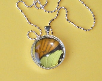Real Butterfly Wing Pendant  BF11