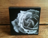 "White Rose Photo Block 4"" X 4"""