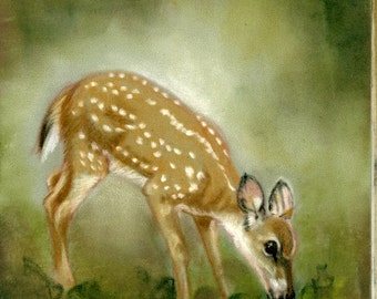 Fawn eating- a pastel drawing from artist Wendy Leedy's wildlife collection- fine art print, signed