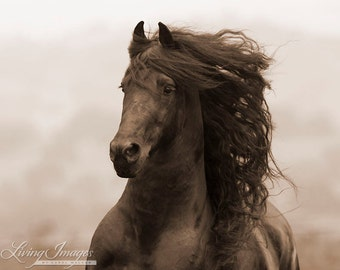 Friesian Runs - Sepia Collection - Fine Art Horse Photograph - Horse - Friesian - Fine Art Print