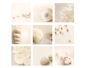 Beach Decor, White Shell Photo, Beach Home Decor Set, wall art, beach house decor, neutral, seashells, beach house decor, white, tan, cream