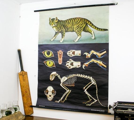 Gorgeous school pull down map cat, german make zoology print