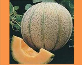 Heirloom Delicious Melon Seeds
