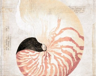 Antique Nautilus Art Collage Print - Natural History - Nautilus Collage Home Decor - Beach Decor
