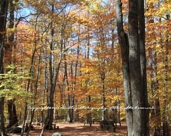 The Woods of Bear Heaven, Bear Heaven - West Virginia