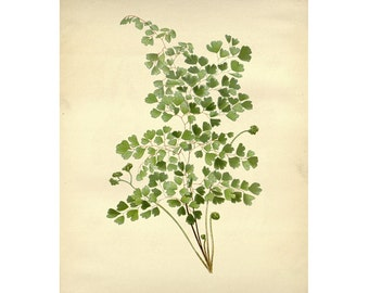 Vintage Botanical Floral Leaf/Greens Series Plate 6 Digital Download: 8x10, specimens, vntage-look, printing and framing, decoupage
