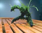 Mini Mossman for shrimp aquariums