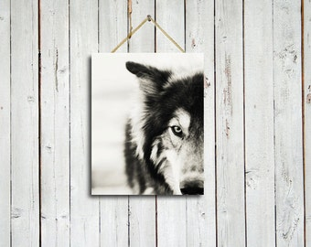 The Wolf - 8x10 - The Wolf canvas - Wolf canvas - Wolf art - Black and white art - Wolf art - Wolf photography - Dog