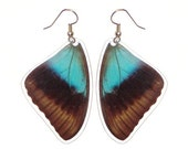 Real Butterfly Wing Earrings - Papilio Pericles top wing
