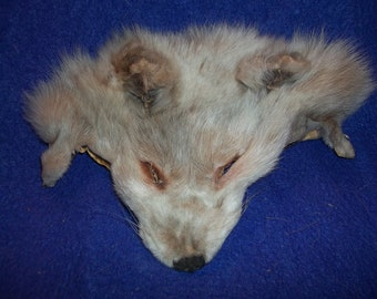 real animal fur Tanned amber fox face head parts