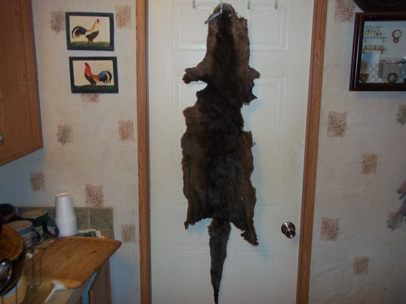 Real Animal Tanned Otter Fur Pelt Taxidermy Rug Hide Part Pow