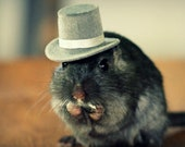Refrigerator Magnet Rectangle Gerbil in A Gray Top Hat