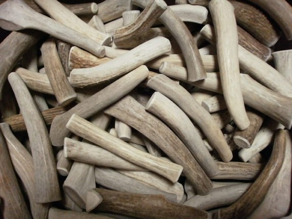 5 natural antler dog chew treats pet food deer toy real shed antlers