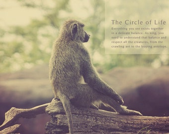 Baboon Photo, Monkey Photography, Jungle Photo, Baboon Art, Baboon Print, Baboon Photography, Baboon Photograph, Nursery Wall Art