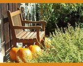 Pumpkins in New England 5x7