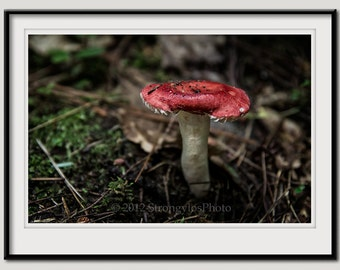 8x12 red mushroom photography, fungi, forest mushrooms photo, nature inspired decor, earth tones, green moss brown mushrooms, woodland