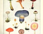 Mushroom print 1950s vintage illustrations 11 varieties toadstools