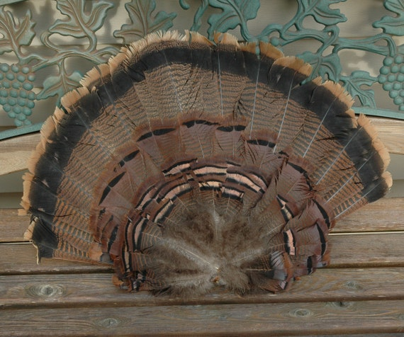Vintage Actual TURKEY Complete Tail Feathers Fanned Out Beautiful