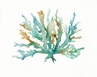 No. 2 Sea Coral  / Teal / Aqua / Yellow Ochre / Watercolor