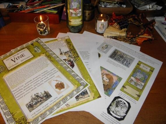 Celtic Tree Calendar Series: Vine Month September 2- September 29