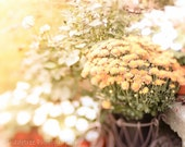 Fall Flowers Mums Softly Focused Yellow Orange Harvest Decor Fall Autumn October, Fine Art Print