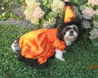 Dog Halloween Dog Witch Costume Orange/Black Spider Web