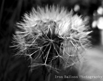 Romantic Soft Dandelion