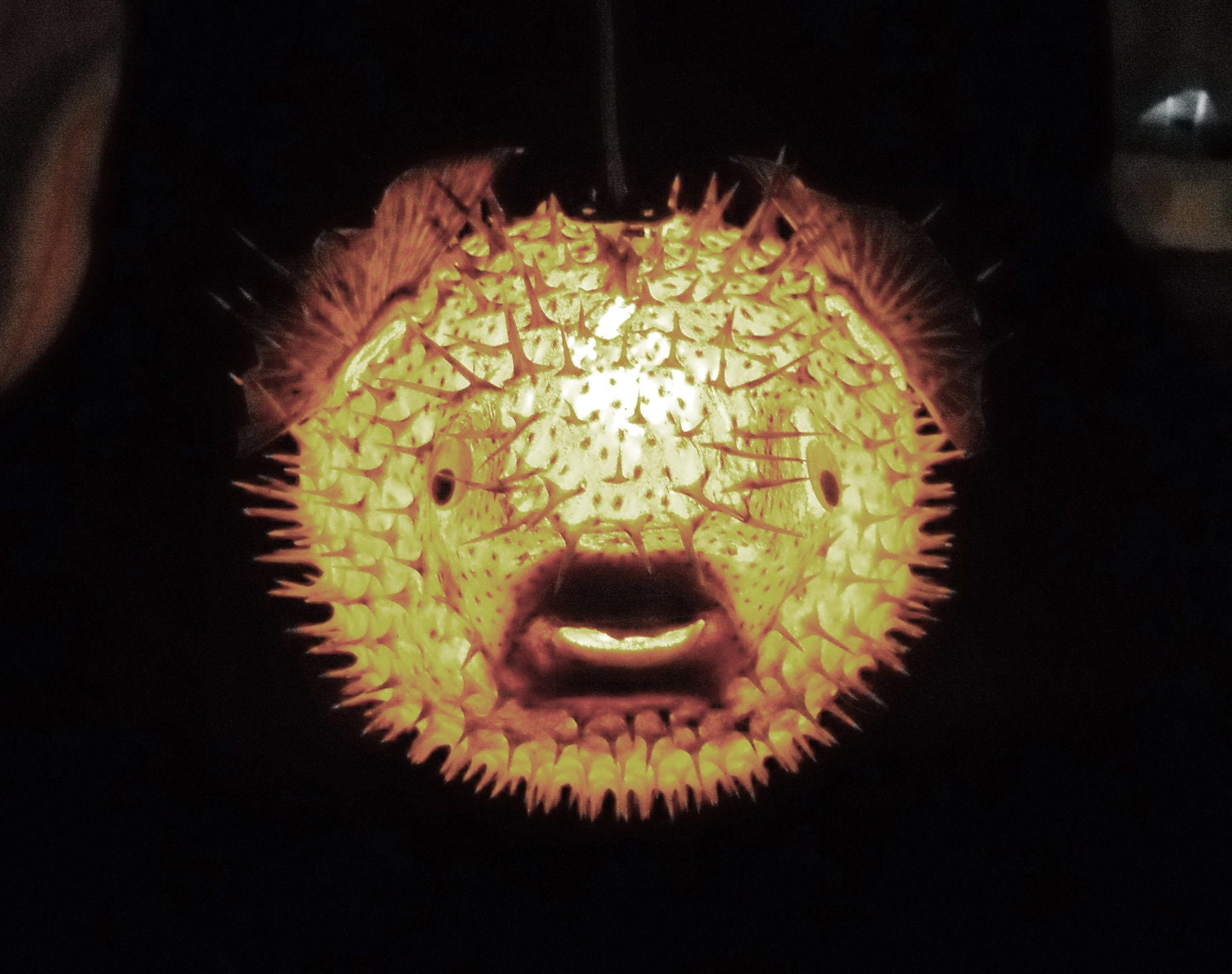 Big 14 Hanging Puffer Fish Light Real Blowfish By Evasfeathers