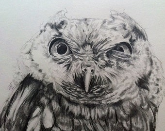 Screech Owl Stink Eye pencil drawing 18x24