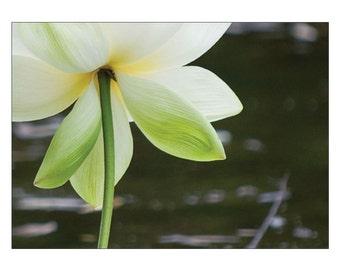 no mud no lotus thich nhat hanh pdf