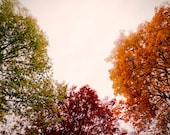 Large Wall Art-Fall Tree Photo- autumn leaves-Green Red and Orange Leaves-Bergen, Norway-Vintage Style Photography-Home Decor- 16x20