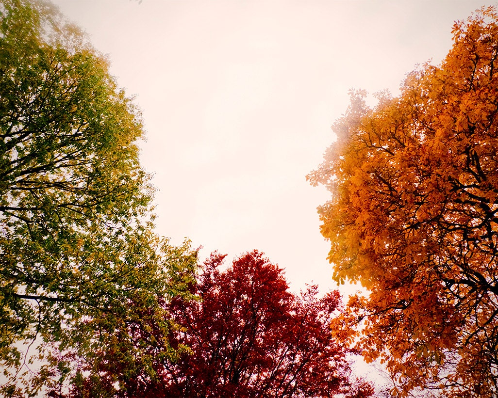 Large Wall Art-Fall Tree Photo Autumn Leaves-Green Red And