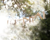 Laundry Room, Laundry Room Decor, Clothesline and Clothespins, Fine Art Photography, Country Life, Laundry Line Art Print