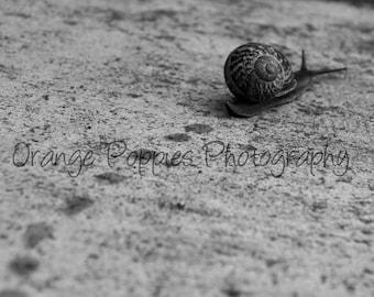 Garden Snail Photograph *choose your size*