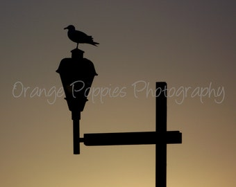 Seagull Silhouette Photograph *choose your size*