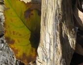 Petrified Wood colorful south dakota display