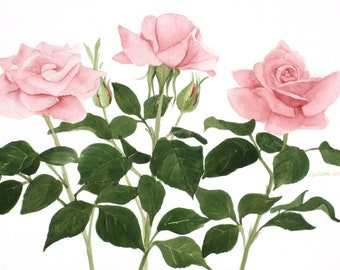 Pink Rose Trio Original Watercolor
