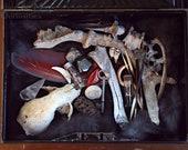 "Curiosity cabinet. ""Vincent."" Vintage tin of curiosities. Skull. Bone. Feather. Vintage Vials. Tooth. Minerals."