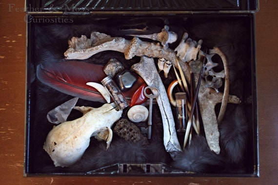 "Curiosity cabinet. ""Vincent."" Vintage tin of curiosities. Skull. Bone. Feather. Vintage Vials. Tooth. Minerals."