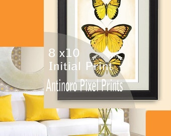 Yellow Butterfly Chic Digital illustration Wall Art - 8x11  Unframed.