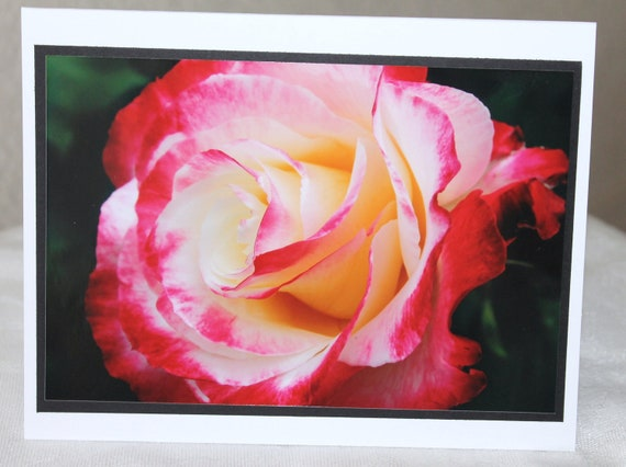 photo card, flower, rose, pink and white,