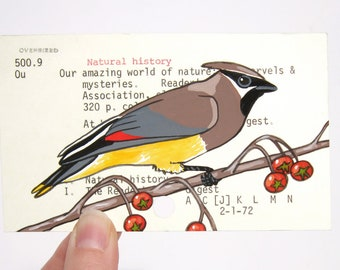 Cedar Waxwing on Library Card - Print of painting of cedar waxwing on library card catalog card for the book Our Amazing World of Nature