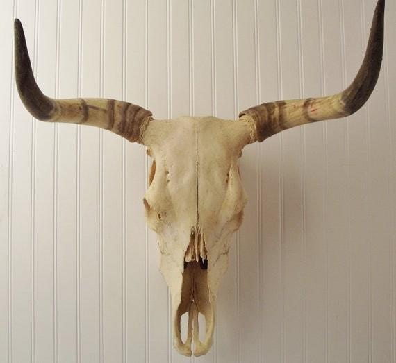 Lg Skeletal Steer Head w/ Horns...The Real Deal