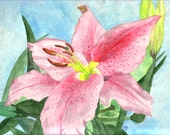 """Watercolor painting, Pink Lily, 9""""x12"""""""