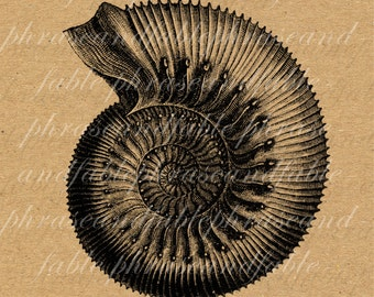 Ammonite 132 Digital Download Marine Extinct Mollusc Science History Spiral Fossil Biology