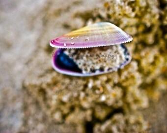 Tiny Grains of Sand Figure 8 Island, Wilmington, North Carolina Color-Fine Art Photography-Multiple Sizes Available, Beachouse Shells