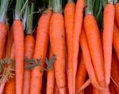 Tendersweet Heirloom Carrot Seeds Non GMO Clearance Sale